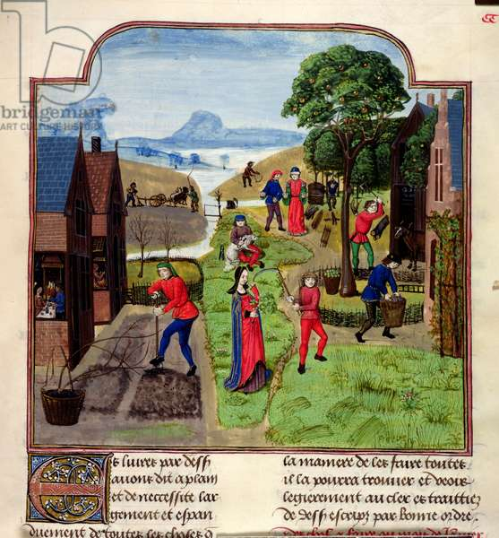 Add 19720 f.305 Agricultural pursuits, from the 'Croissens Manual of Agriculture, (late 15th c.)' (vellum)