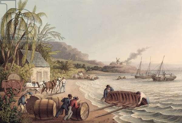 Loading Barrels of Rum and Sugar, Antigua, 1823 (print)