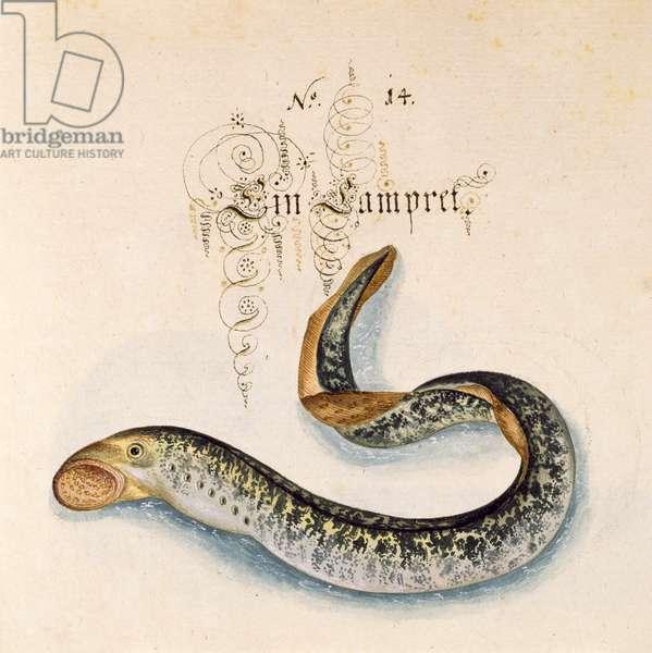 Add 6485 f.50 Sea Lamprey, 1653