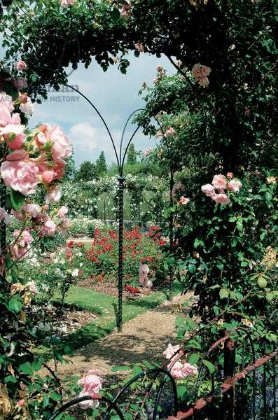 The Rose Garden pergola at Blenheim Palace (photo)