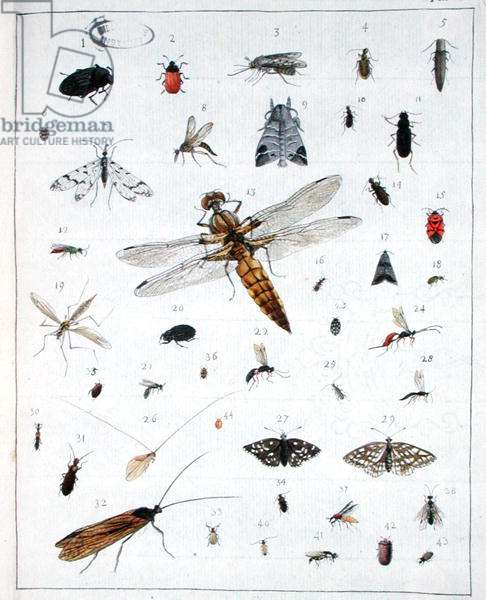 Various insects, plate III from 'Diarium Zoologicum', 1787 (pen & ink and w/c on paper)