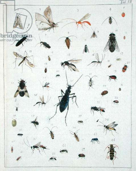 Various insects, plate VII from 'Diarium Zoologicum', 1787 (pen & ink and w/c on paper)