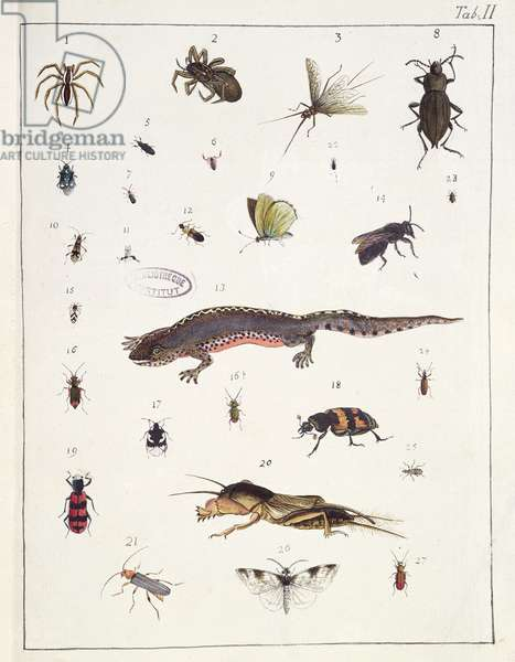 Various insects and a lizard, plate II from 'Diarium Zoologicum', 1787 (pen & ink and w/c on paper)