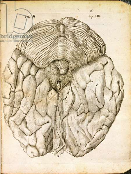 The Structure of the Brain, from 'De Homine Figuris' by Rene Descartes (1596-1650) published in The Hague, 1662 (engraving)