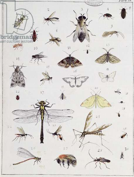 Various insects, plate IV from 'Diarium Zoologicum', 1787 (pen & ink and w/c on paper)