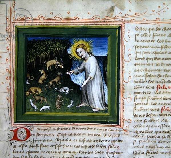 Ms 313 Creation of the Animals, from the Bible des Grands Augustins, 1494 (vellum)