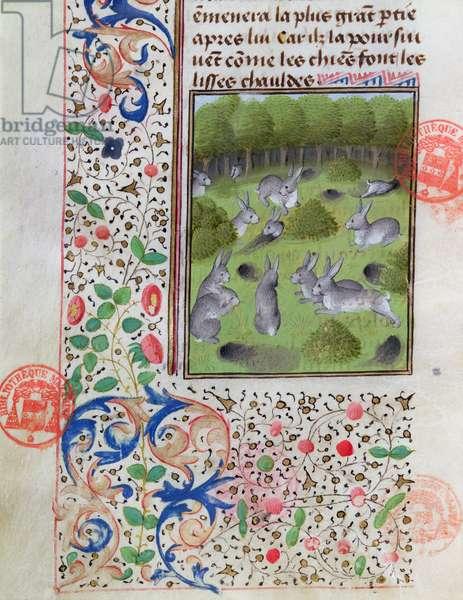 Rabbit warren, from the Livre de la Chasse by Gaston Phebus de Foix (1331-91) (vellum)