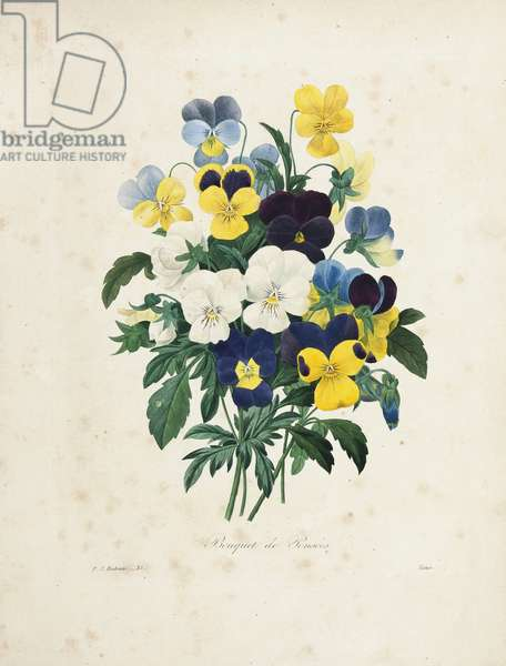 Bouquet of Pansies, engraved by Victor, from 'Choix des Plus Belles Fleurs et des Plus Beaux Fruits', Vol. I, 1827-33 (coloured engraving)