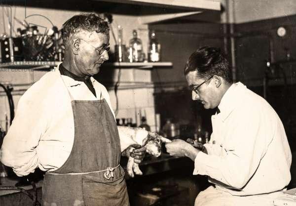 Two Scientists with a Rabid Rabbit, Institut Pasteur, Paris, France, c.1915 (silver gelatin print)