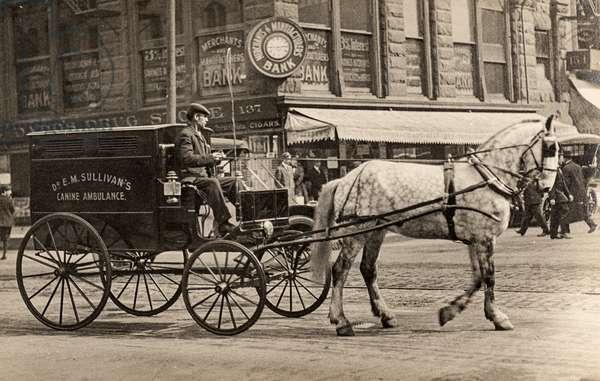 Canine Ambulance of Dr.E.M. Sullivan, Horse Drawn, c.1905 (silver gelatin print)