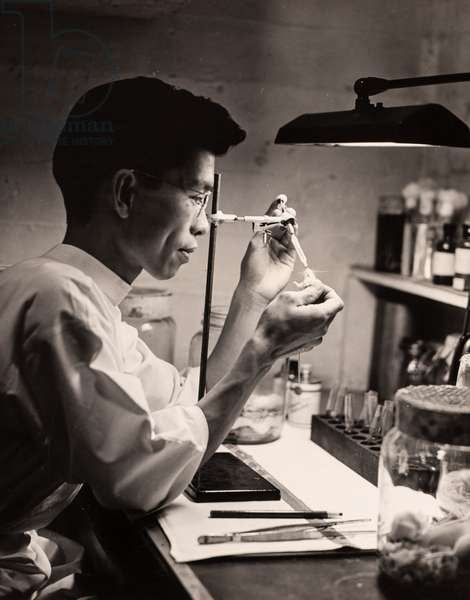 Scientist Feeding Mouse with Pipette, July 1943 (silver gelatin print)