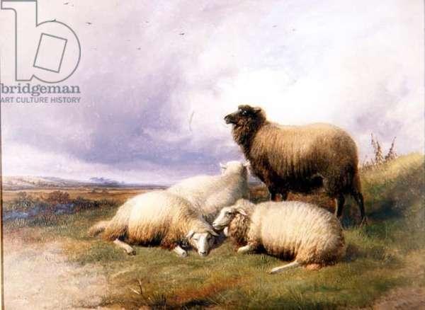Sheep in a Landscape, 1894 (oil on board)