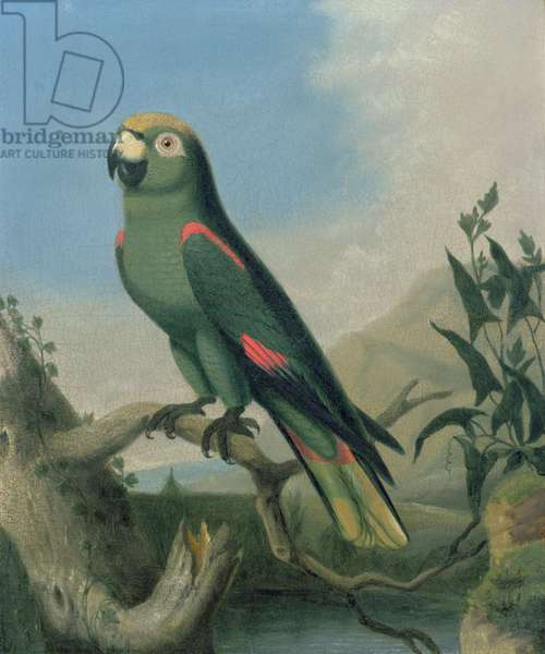 A Green Parrot on a Branch (panel)