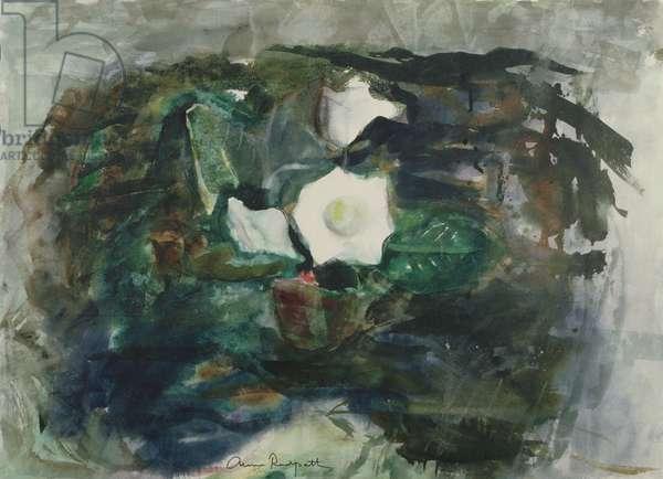 White Gloxinia, 1964 (w/c)