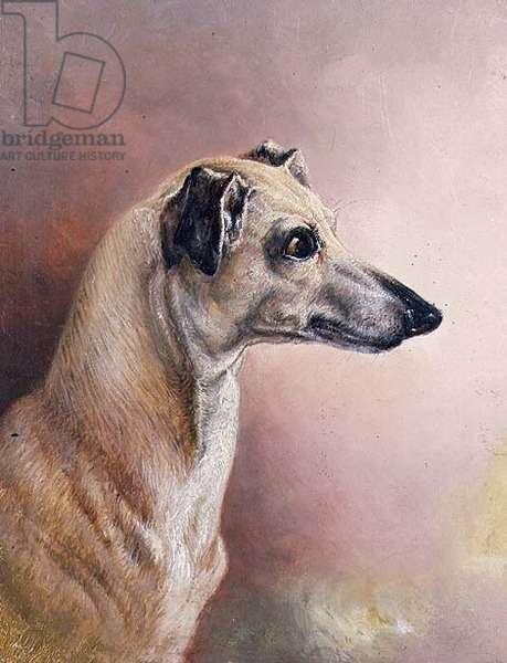 Head of a Greyhound (panel)