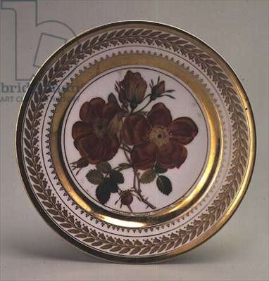Plate from the Rose Series from the Yusupov Factory, near Moscow, 1827 (porcelain)