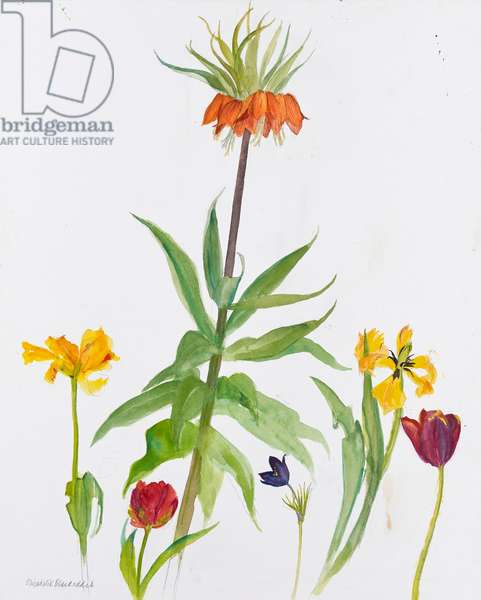 Tulips and crown imperial, 2011 (w/c on paper)