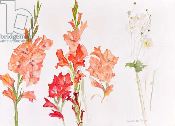 Gladioli (w/c on paper)