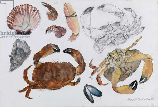Crabs and Other Shells, 2010 (w/c & pencil on paper)