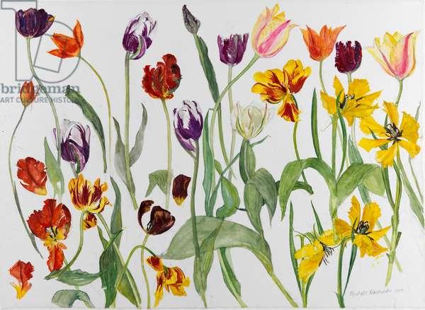Tulips, 2010 (w/c on paper)