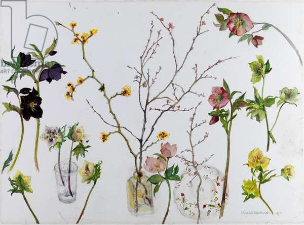 Hellebore and Spring Blossoms, 2010 (w/c on paper)