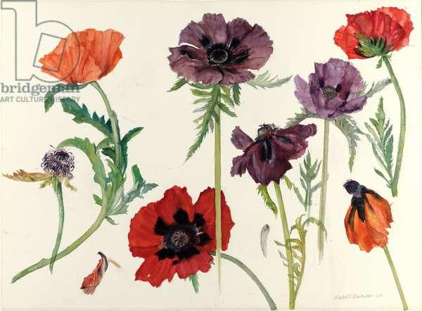Oriental Poppies, 2010 (w/c on paper)