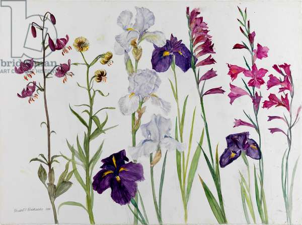 Irises, Lilies and Gladeoli Byzantium, 2010 (w/c on paper)