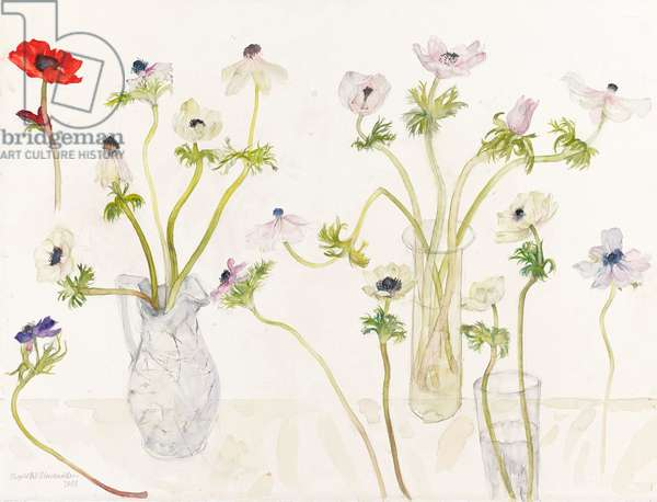 Pale anemones, 2008 (w/c on paper)