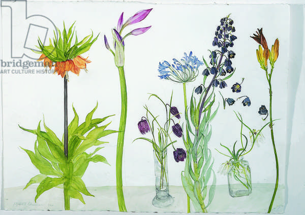 Fritillarias & Lilies (w/c on paper)