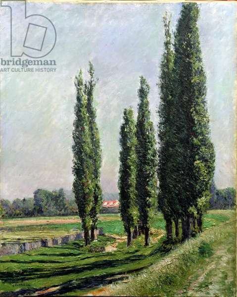 Poplars on the Riverbank at Argenteuil (oil on canvas)