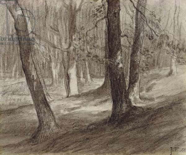 Trees in a forest (charcoal)