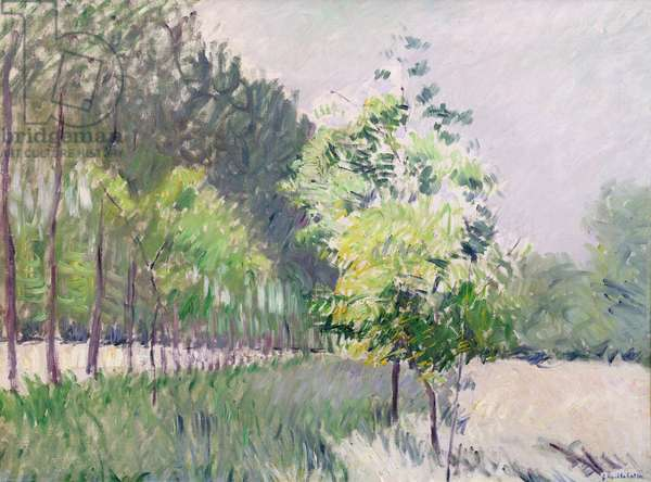 Orchard and avenue of trees (oil on canvas)