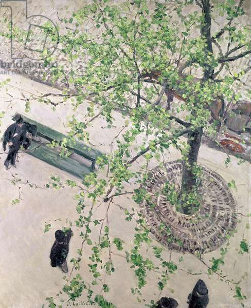 The Boulevard Viewed from Above, 1880 (oil on canvas)
