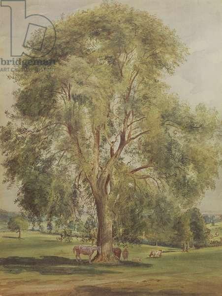 The Tree (w/c)