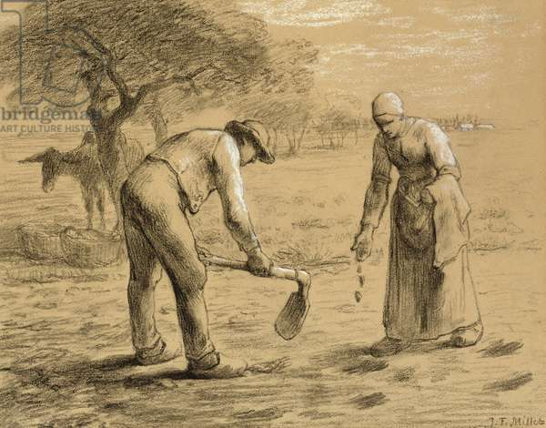 Peasants planting potatoes (pencil and chalk on paper)