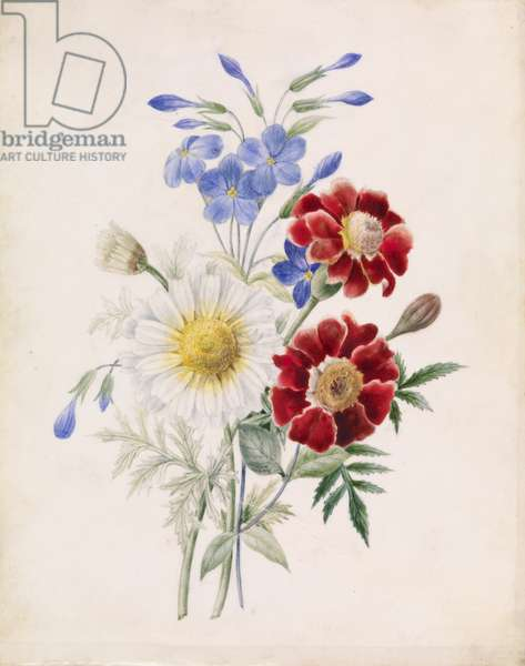 Flowers and White Daisy, c.1840 (w/c on paper)