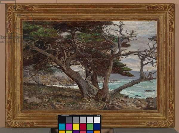 Monterey Cypress, Pebble Beach, 1915 (oil on canvas)