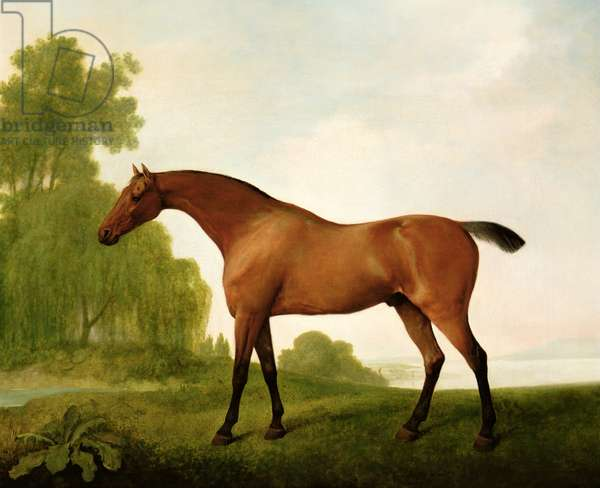 A Bay Thoroughbred in a Landscape, 1801 (oil on canvas)