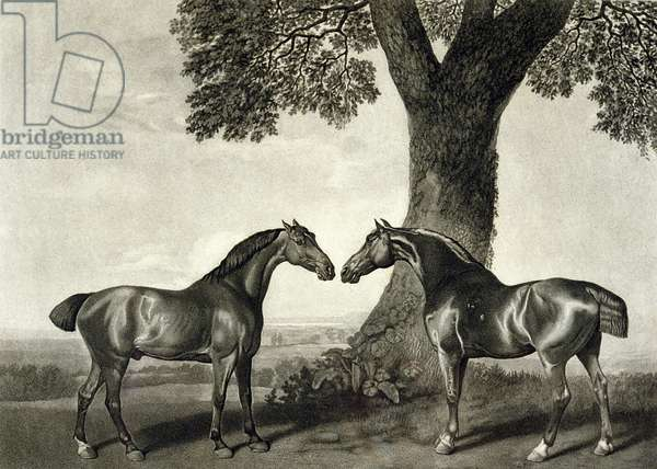 Two Hunters, engraved by G.T. Stubbs (bap.1748-c.1815) (litho) (see also 266802)