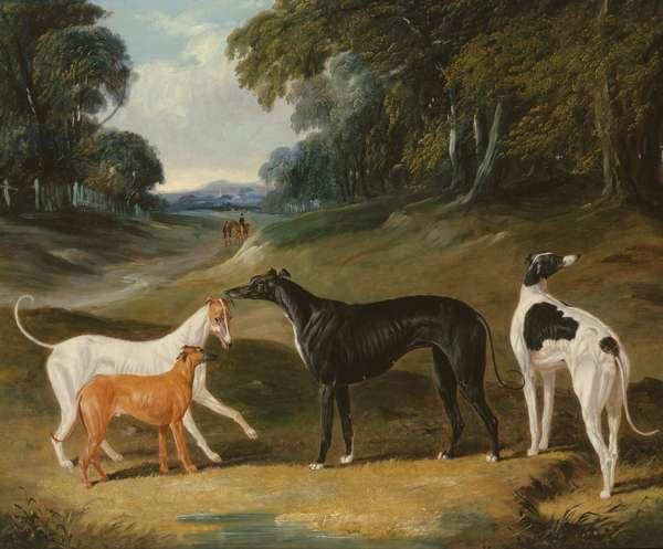 Greyhounds, 'Spot', 'Skylark', 'Nettle' and 'Sky', 1839 (oil on canvas)