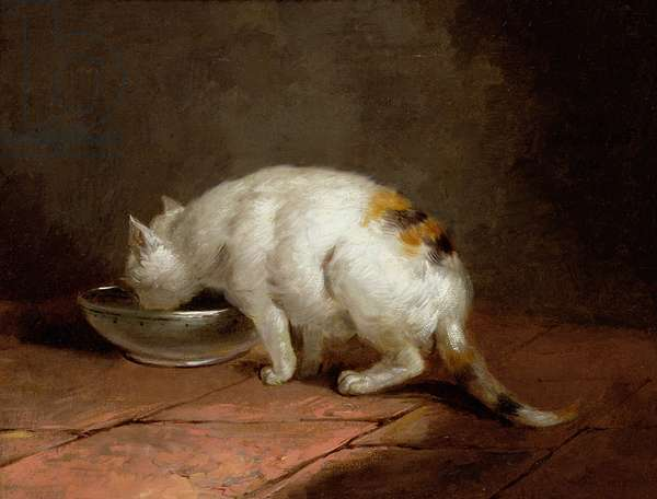The Artist's Cat Drinking, 1792 (oil on canvas)