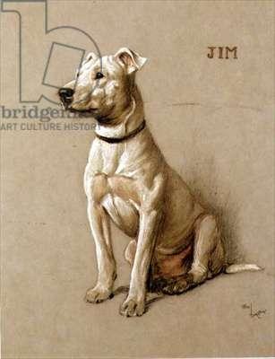 Jim, a Bull Terrier (chalk on grey paper)