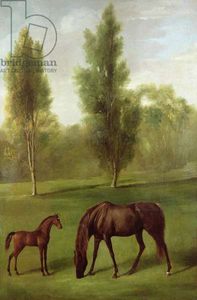 A Chestnut Mare and Foal in a Wooded Landscape, c.1761-63 (oil on canvas)