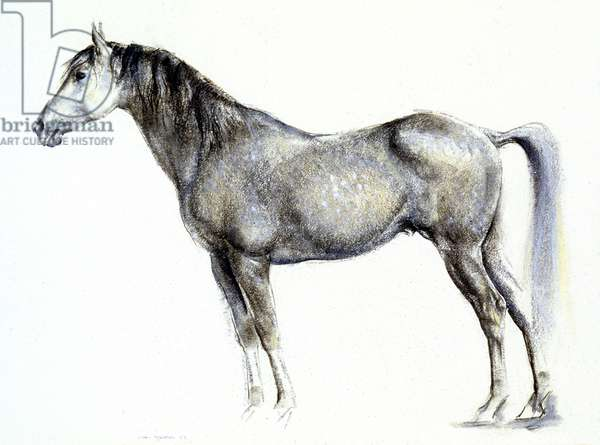 Grey Horse, 1962 (pastel on paper)