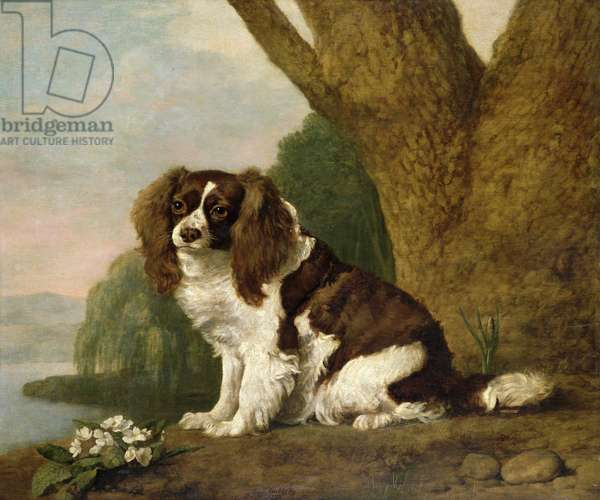 Fanny, a brown and white spaniel, 1778 (oil on canvas)
