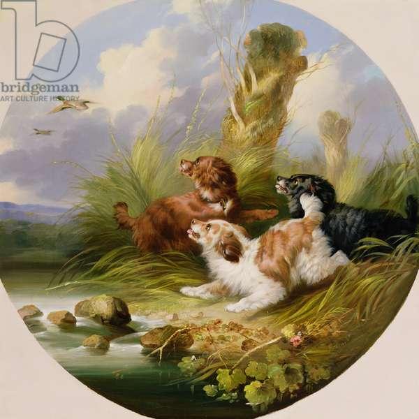 Three Spaniels Flushing Mallard (oil on canvas)