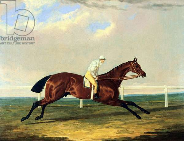'Tarrare' ridden by George Nelson (oil on canvas)