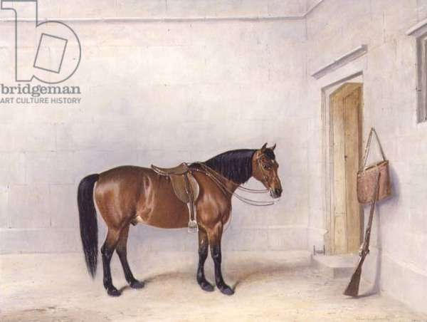 Saddled Bay Shooting Pony, 1879 (oil on canvas)