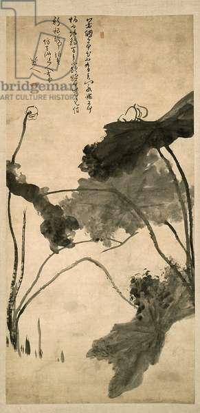 Lotus, Homage to Xu Wei, Kangxi Period (1689-90) Qing Dynasty (ink on paper)