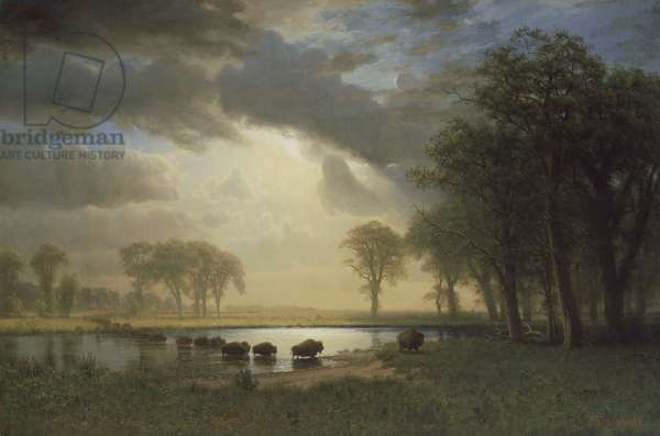 The Buffalo Trail, c.1867 (oil on canvas)